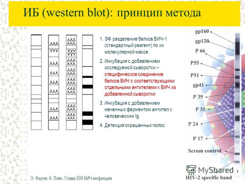 ИБ (western blot): принцип метода 1.ЭФ разделение белков ВИЧ-1 (стандартный реагент) по их молекулярной массе специфическое соединение белков ВИЧ с соответствующими отдельными антителами к ВИЧ из добавленной сыворотки 2.Инкубация с добавлением исслед