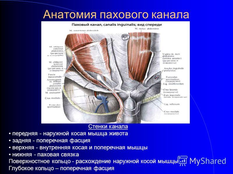 Анатомия пахового канала Стенки канала передняя - наружной косая мышца живота задняя - поперечная фасция верхняя - внутренняя косая и поперечная мышцы нижняя - паховая связка Поверхностное кольцо - расхождение наружной косой мышцы Глубокое кольцо – п