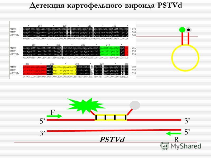 F R 5 3 3 5 PSTVd Детекция картофельного вироида PSTVd