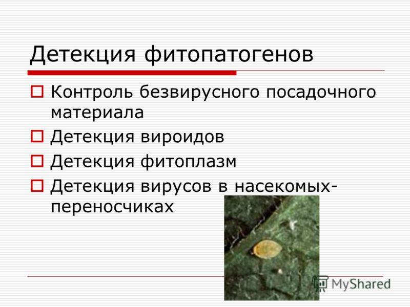 Детекция фитопатогенов Контроль безвирусного посадочного материала Детекция вироидов Детекция фитоплазм Детекция вирусов в насекомых- переносчиках