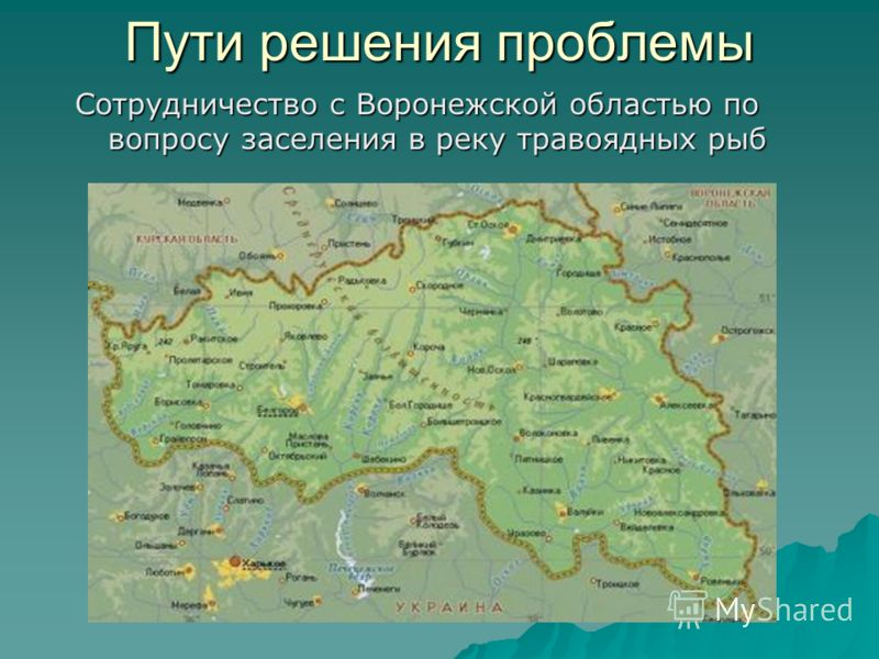 Пути решения проблемы Сотрудничество с Воронежской областью по вопросу заселения в реку травоядных рыб