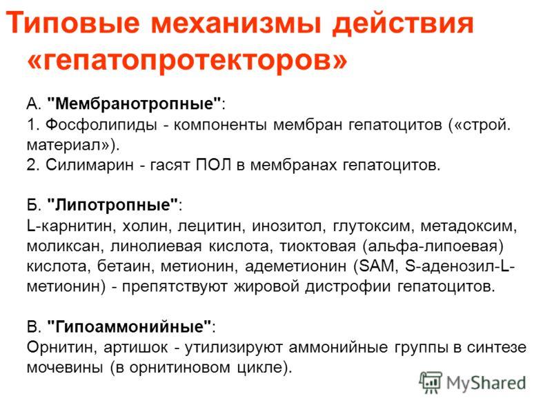 Типовые механизмы действия «гепатопротекторов» А.