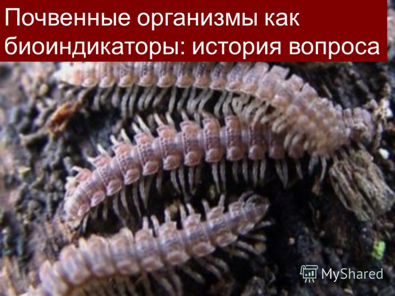 Почвенные организмы как биоиндикаторы: история вопроса