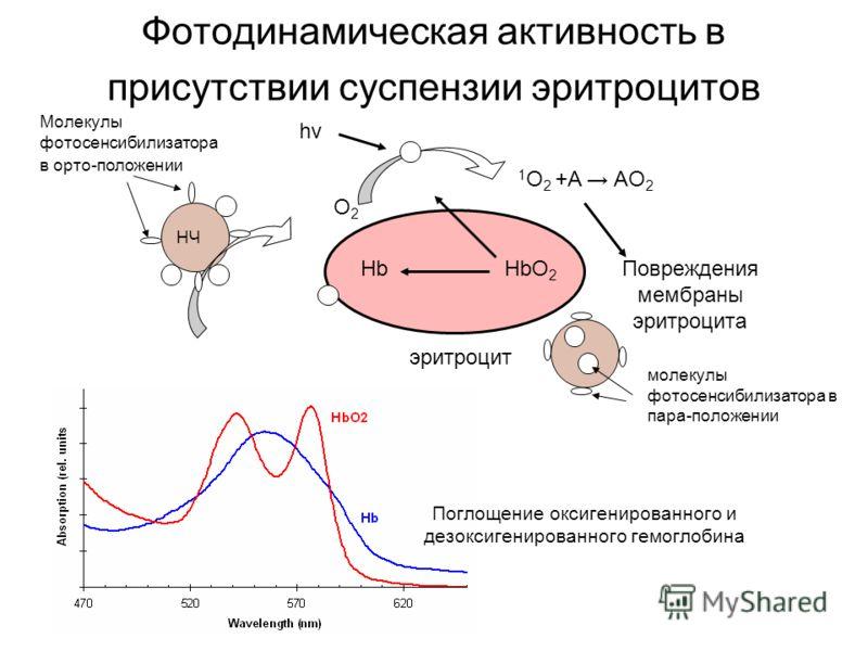 Фотодинамическая активность в присутствии суспензии эритроцитов НЧ hνhν 1 O 2 +A AO 2 HbO 2 HbПовреждения мембраны эритроцита эритроцит O2O2 Поглощение оксигенированного и дезоксигенированного гемоглобина Молекулы фотосенсибилизатора в орто-положении