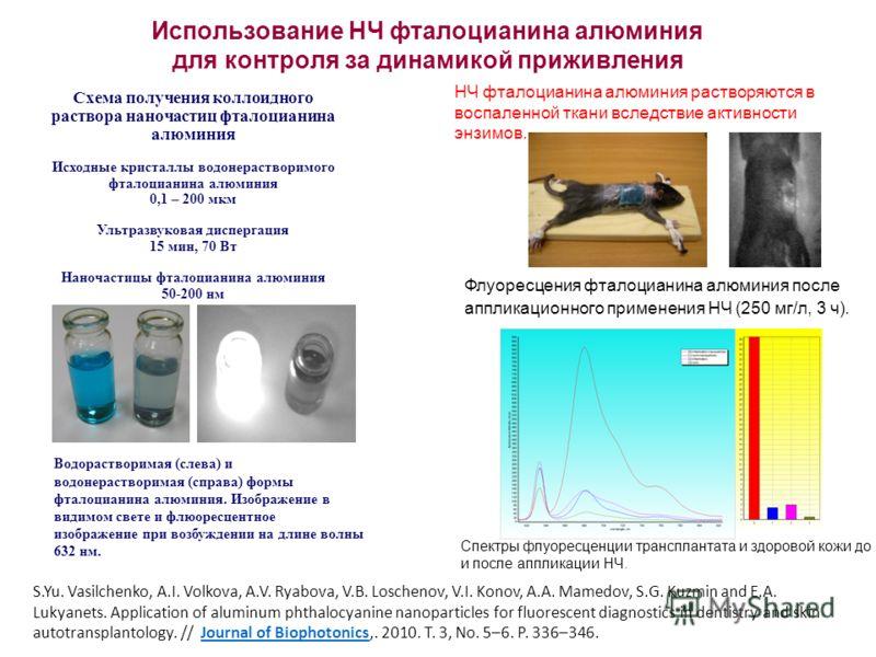 Использование НЧ фталоцианина алюминия для контроля за динамикой приживления Флуоресцения фталоцианина алюминия после аппликационного применения НЧ (250 мг/л, 3 ч). Спектры флуоресценции трансплантата и здоровой кожи до и после аппликации НЧ. НЧ фтал