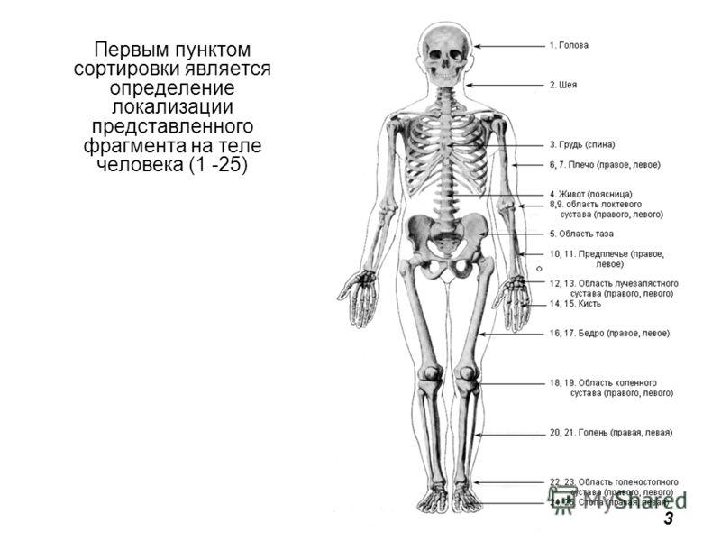 Первым пунктом сортировки является определение локализации представленного фрагмента на теле человека (1 -25) 3