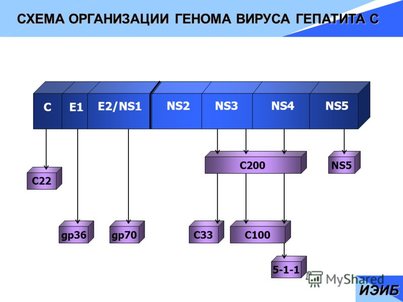 C200 C33 C100 NS5 5-1-
