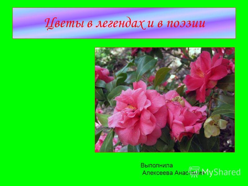 Цветы в легендах и в поэзии Выполнила Алексеева Анастасия