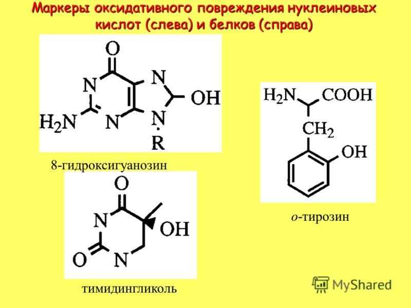 Маркеры оксидативного повреждения нуклеиновых кислот (слева) и белков (справа) 8-гидроксигуанозин тимидингликоль о-тирозин