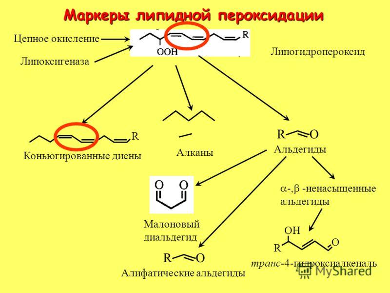 Маркеры липидной пероксидации R Липогидропероксид Алканы R O Альдегиды Коньюгированные диены Малоновый диальдегид OH O R транс-4-гидроксиалкеналь -, -ненасыщенные альдегиды Цепное окисление Липоксигеназа R O Алифатические альдегиды