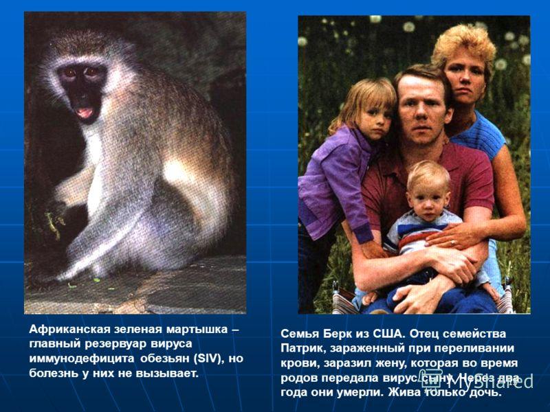 15 Африканская зеленая мартышка – главный резервуар вируса иммунодефицита обезьян (SIV), но болезнь у них не вызывает. Семья Берк из США. Отец семейства Патрик, зараженный при переливании крови, заразил жену, которая во время родов передала вирус сын