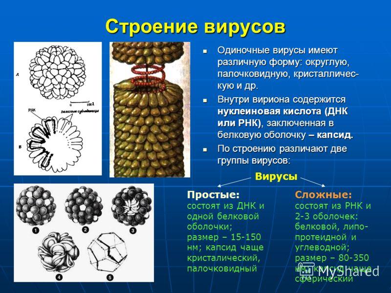 4 Строение вирусов Одиночные вирусы имеют различную форму: округлую, палочковидную, кристалличес- кую и др. Одиночные вирусы имеют различную форму: округлую, палочковидную, кристалличес- кую и др. Внутри вириона содержится нуклеиновая кислота (ДНК ил