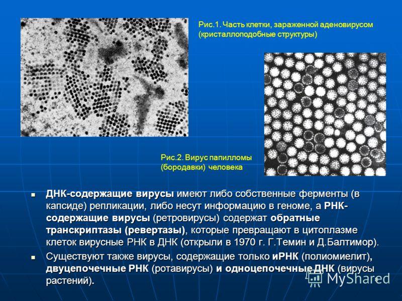 8 ДНК-содержащие вирусы имеют либо собственные ферменты (в капсиде) репликации, либо несут информацию в геноме, а РНК- содержащие вирусы (ретровирусы) содержат обратные транскриптазы (ревертазы), которые превращают в цитоплазме клеток вирусные РНК в