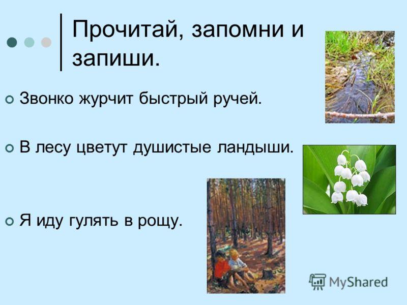 Прочитай, запомни и запиши. Звонко журчит быстрый ручей. В лесу цветут душистые ландыши. Я иду гулять в рощу.