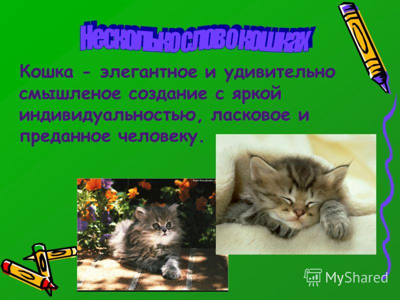Кошка - элегантное и удивительно смышленое создание с яркой индивидуальностью, ласковое и преданное человеку.