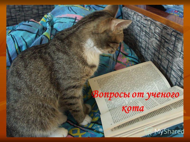 Вопросы от ученого кота