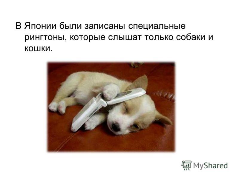 Звук который слышит только собака