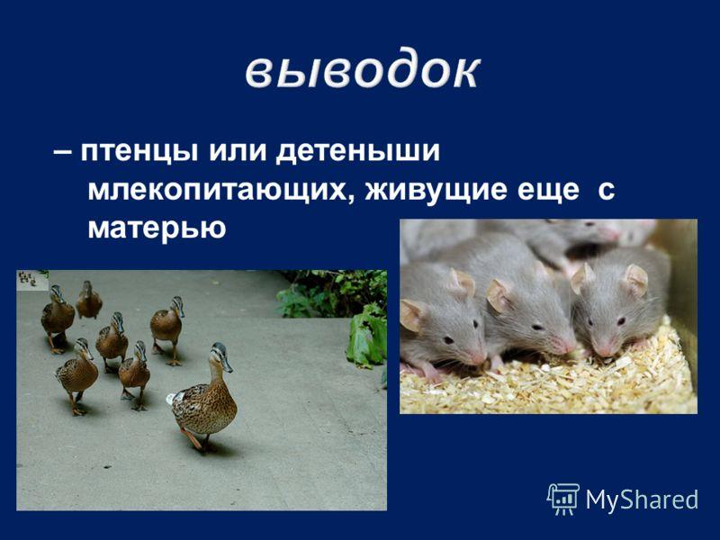 – птенцы или детеныши млекопитающих, живущие еще с матерью