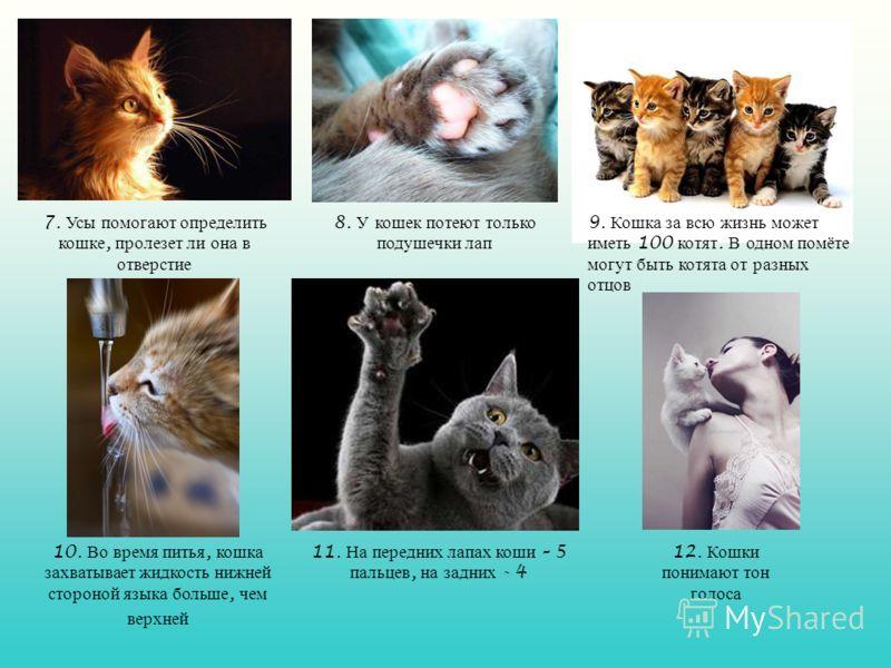 9. Кошка за всю жизнь может иметь 100 котят. В одном помёте могут быть котята от разных отцов 8. У кошек потеют только подушечки лап 7. Усы помогают определить кошке, пролезет ли она в отверстие 10. Во время питья, кошка захватывает жидкость нижней с