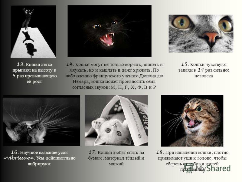 13. Кошки легко прыгают на высоту в 5 раз превышающую её рост 17. Кошки любят спать на бумаге : материал тёплый и мягкий 18. При нападении кошки, плотно прижимают уши к голове, чтобы сберечь от зубов и когтей противника 16. Научное название усов «vib