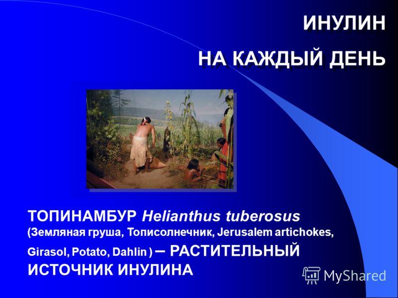ТОПИНАМБУР Helianthus tuberosus (Земляная груша, Тописолнечник, Jerusalem artichokes, Girasol, Potato, Dahlin ) – РАСТИТЕЛЬНЫЙ ИСТОЧНИК ИНУЛИНА ИНУЛИН НА КАЖДЫЙ ДЕНЬ ИНУЛИН НА КАЖДЫЙ ДЕНЬ