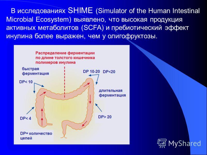 В исследованиях SHIME (Simulator of the Human Intestinal Microbial Ecosystem) выявлено, что высокая продукция активных метаболитов (SCFA) и пребиотический эффект инулина более выражен, чем у олигофруктозы.