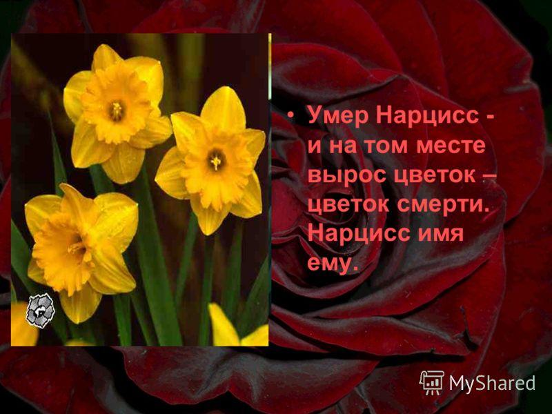 Умер Нарцисс - и на том месте вырос цветок – цветок смерти. Нарцисс имя ему.