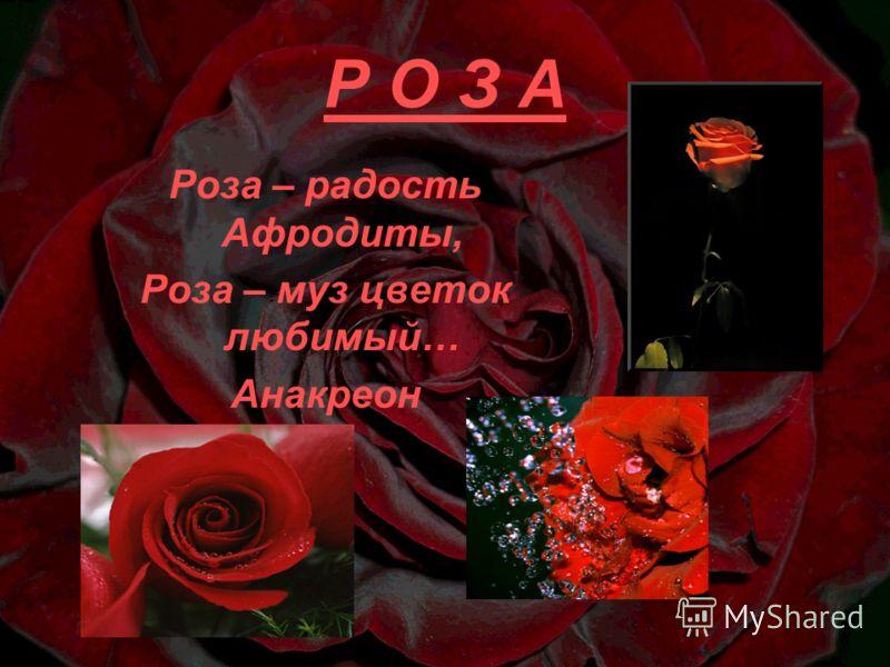 Р О З А Роза – радость Афродиты, Роза – муз цветок любимый… Анакреон