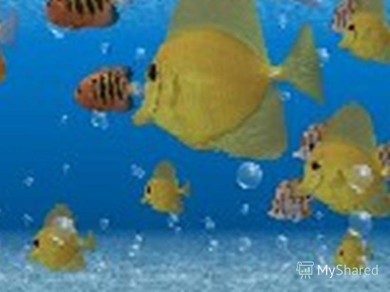 Могу заверить вас,эта рыбка-очень интересное создание.