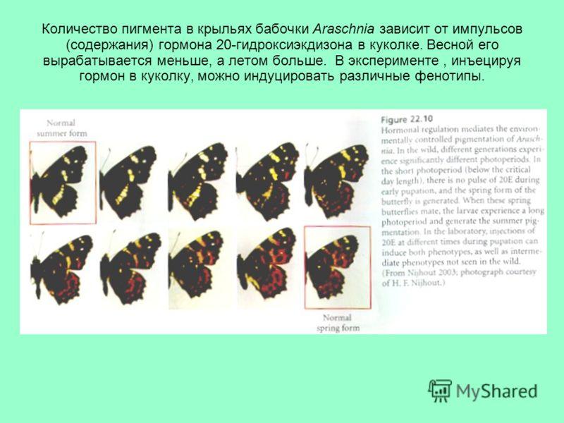 Количество пигмента в крыльях бабочки Araschnia зависит от импульсов (содержания) гормона 20-гидроксиэкдизона в куколке. Весной его вырабатывается меньше, а летом больше. В эксперименте, инъецируя гормон в куколку, можно индуцировать различные феноти