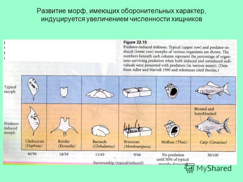 Развитие морф, имеющих оборонительных характер, индуцируется увеличением численности хищников