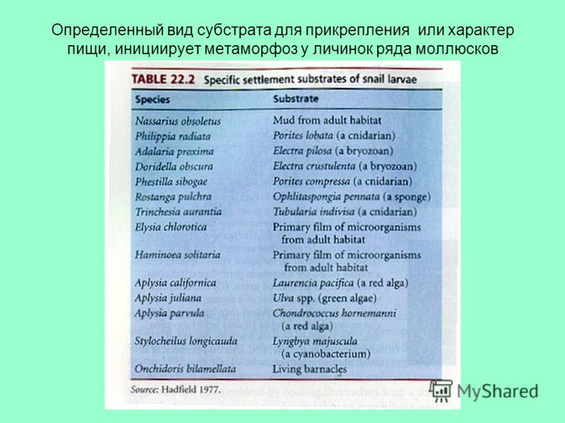 Определенный вид субстрата для прикрепления или характер пищи, инициирует метаморфоз у личинок ряда моллюсков