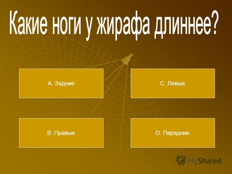 А. Пень В. Коряга С. Колода D. Бревно