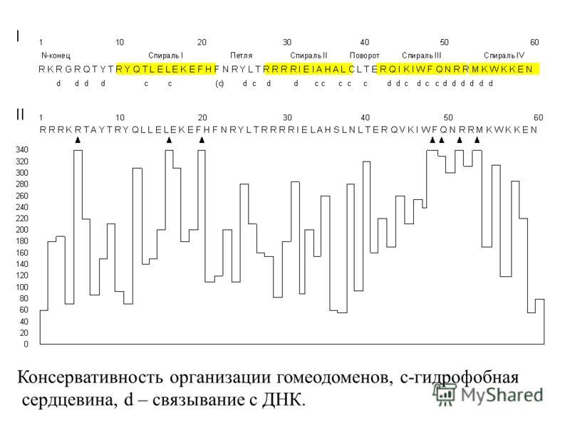 Консервативность организации гомеодоменов, с-гидрофобная сердцевина, d – связывание с ДНК.