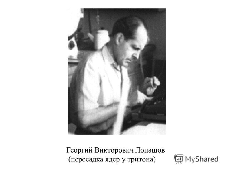 Георгий Викторович Лопашов (пересадка ядер у тритона)