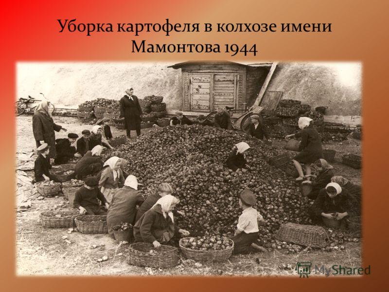 Уборка картофеля в колхозе имени Мамонтова 1944