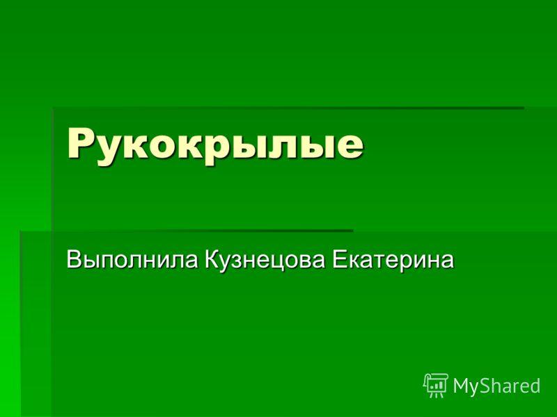 Рукокрылые Выполнила Кузнецова Екатерина
