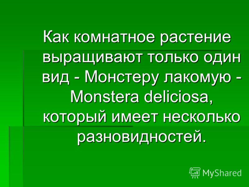 Как комнатное растение выращивают только один вид - Монстеру лакомую - Monstera deliciosa, который имеет несколько разновидностей.