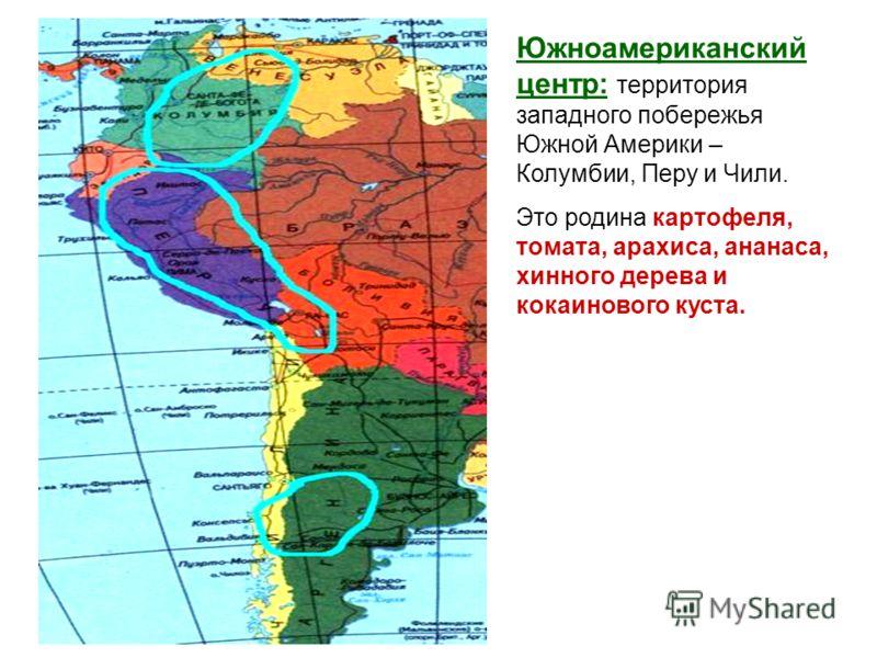 Южноамериканский центр: территория западного побережья Южной Америки – Колумбии, Перу и Чили. Это родина картофеля, томата, арахиса, ананаса, хинного дерева и кокаинового куста.