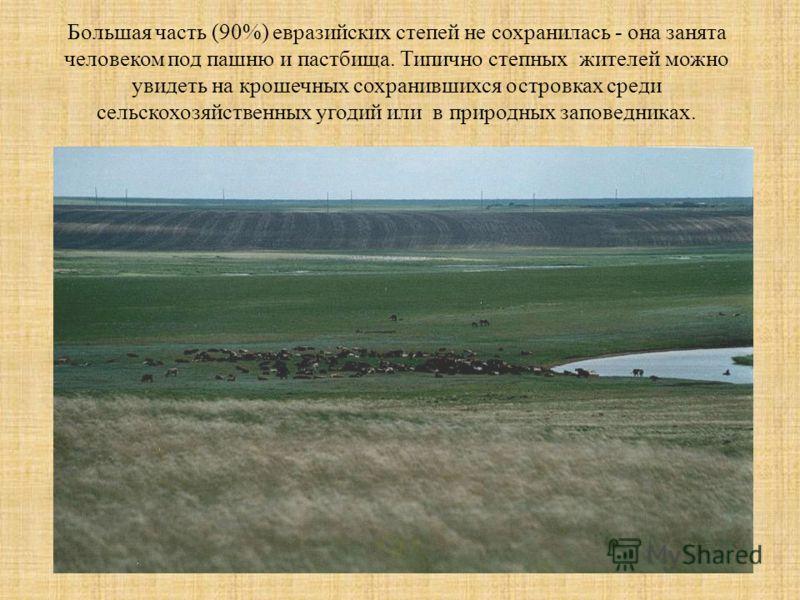 Большая часть (90%) евразийских степей не сохранилась - она занята человеком под пашню и пастбища. Типично степных жителей можно увидеть на крошечных сохранившихся островках среди сельскохозяйственных угодий или в природных заповедниках.