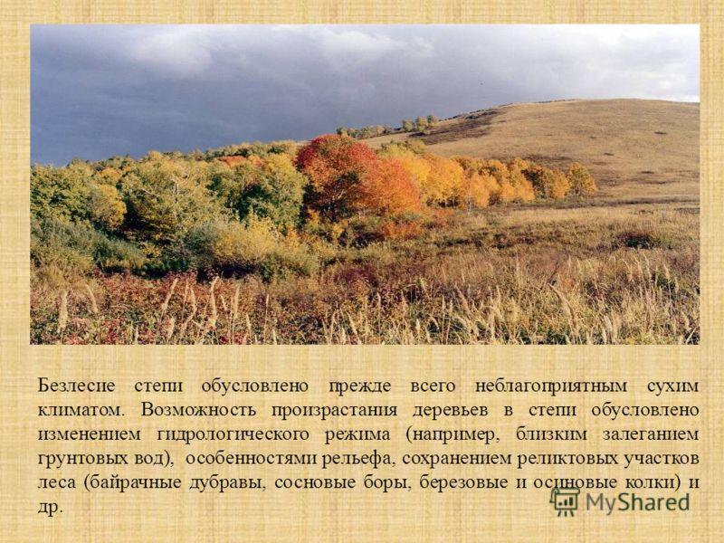 Безлесие степи обусловлено прежде всего неблагоприятным сухим климатом. Возможность произрастания деревьев в степи обусловлено изменением гидрологического режима (например, близким залеганием грунтовых вод), особенностями рельефа, сохранением реликто