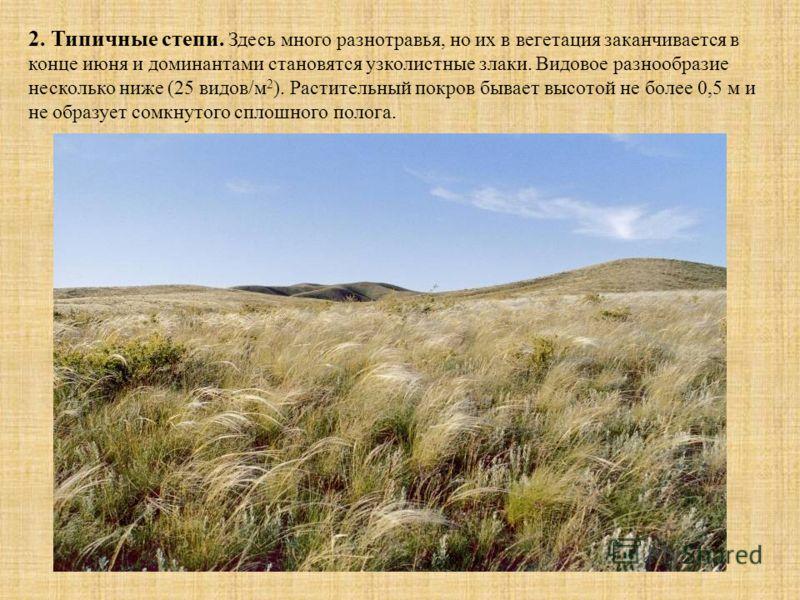 2. Типичные степи. Здесь много разнотравья, но их в вегетация заканчивается в конце июня и доминантами становятся узколистные злаки. Видовое разнообразие несколько ниже (25 видов/м 2 ). Растительный покров бывает высотой не более 0,5 м и не образует