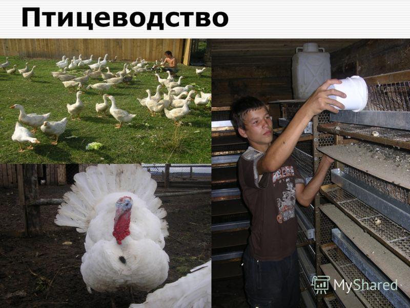 Пермь 2011 г.20 Птицеводство