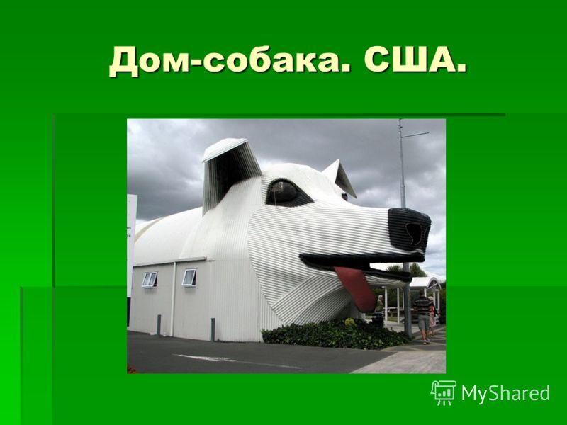 Дом-собака. США.