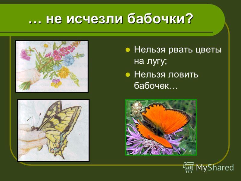 … не исчезли бабочки? Нельзя рвать цветы на лугу; Нельзя ловить бабочек…