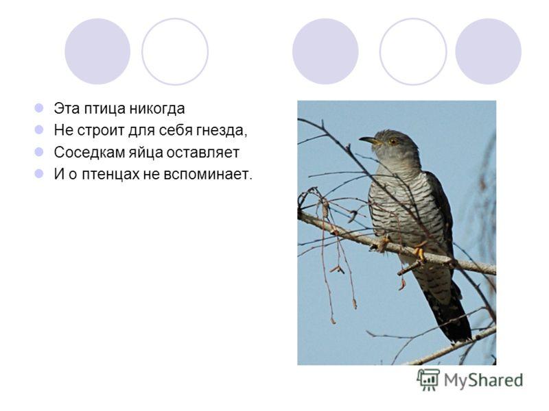 Эта птица никогда Не строит для себя гнезда, Соседкам яйца оставляет И о птенцах не вспоминает.