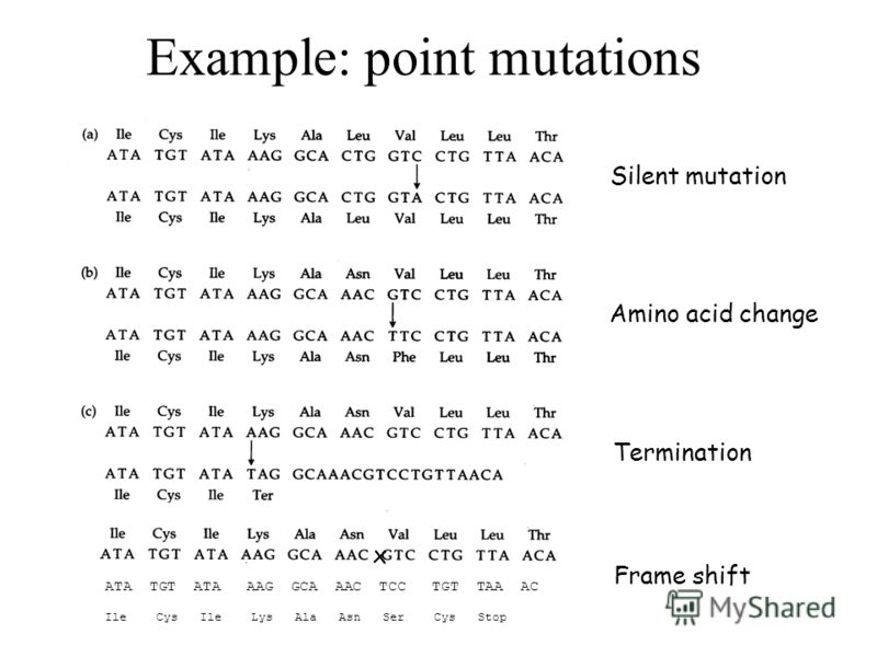 Example: point mutations Silent mutation Amino acid change Termination ATA TGT ATA AAG GCA AAC TCC TGT TAA AC Ile Cys Ile Lys Ala Asn Ser Cys Stop x Frame shift