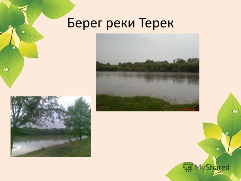 Берег реки Терек