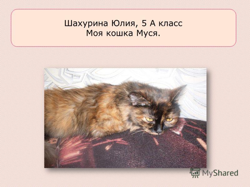 Шахурина Юлия, 5 А класс Моя кошка Муся.