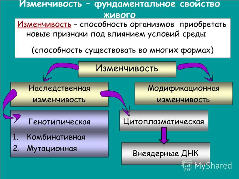 Презентацию по биологии на тему изменчивость